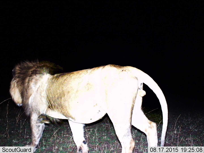 hight resolution of snapshot serengeti