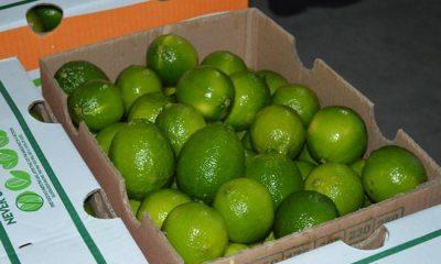 Limón Oaxaca