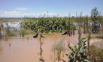 cultivos inundados