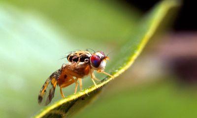 mosca-mediterraneo