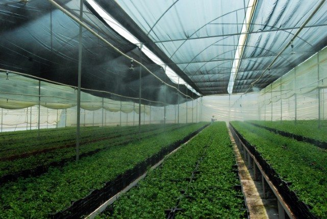 70 mil plantas frutales produjeron los viveros del for Viveros frutales