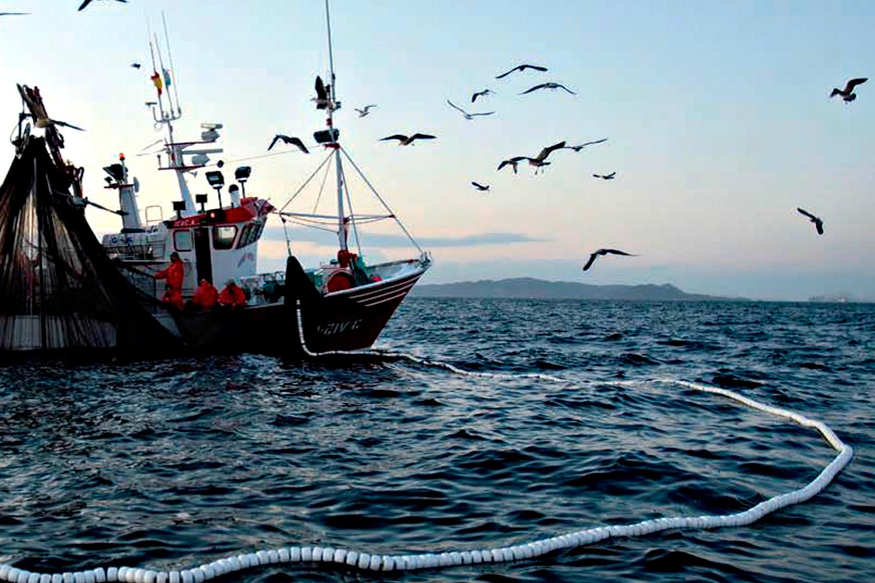 Resultado de imagen para pesca comercial golfo de california