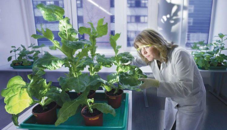 Bayer apoya la investigación agrícola