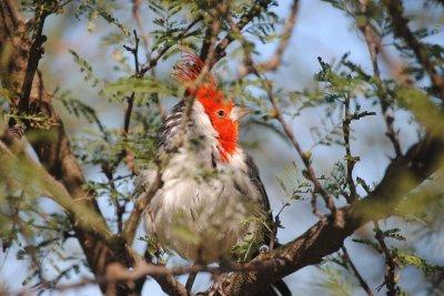 La Fundación Temaikén liberó nás de 100 aves en Morón