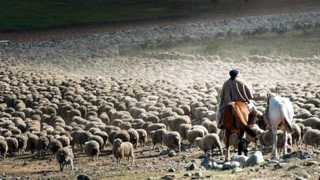 Buenos Aires aprueba 10 proyectos de producción ovina por $3,5 millones