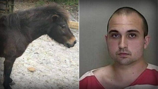 Detienen a un joven en la Florida por tener sexo con su pony