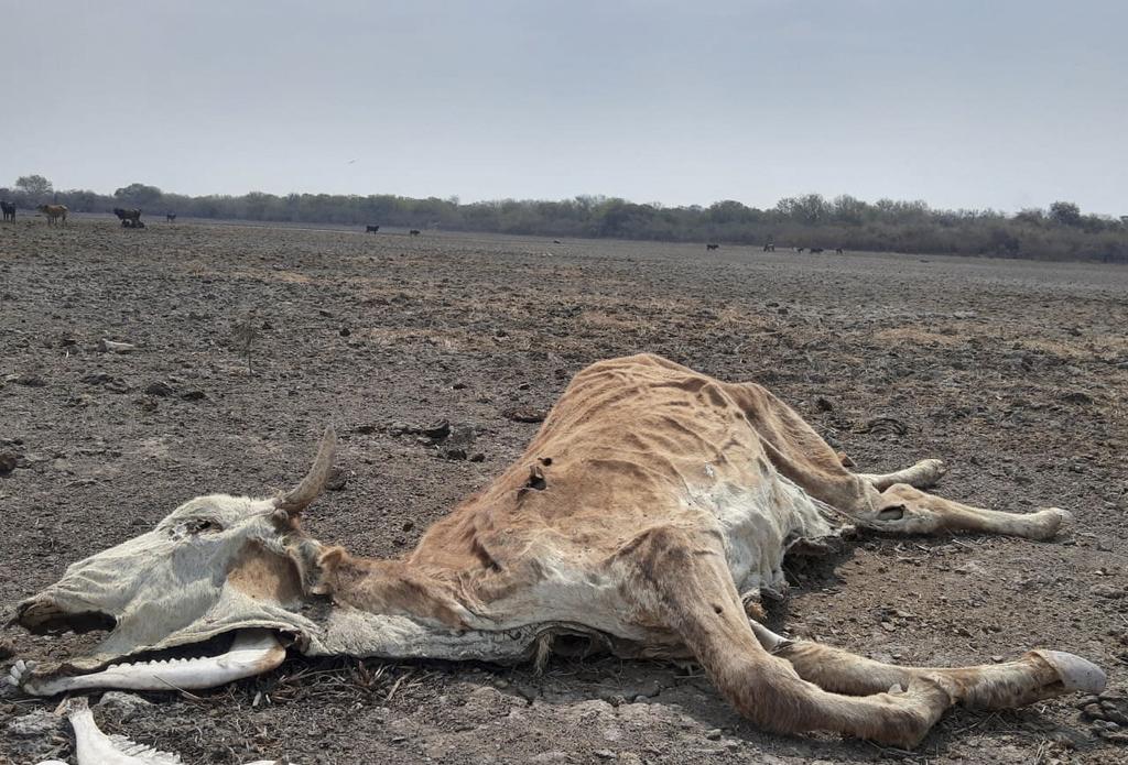 La sequía más intensa en 20 años empuja a la desesperación a campesinos del norte argentino