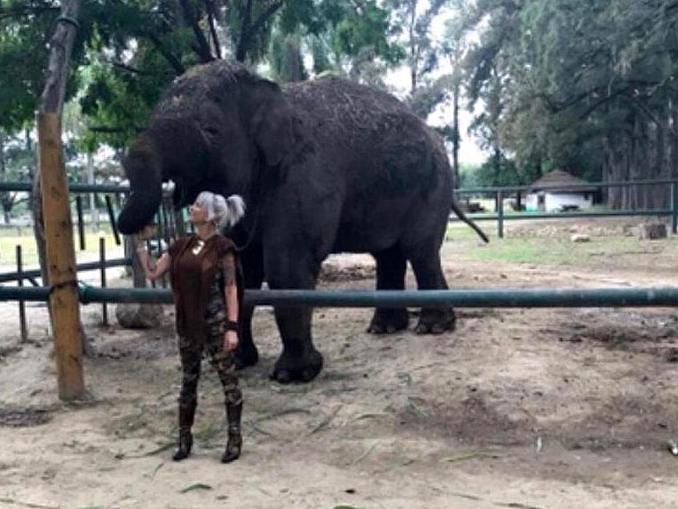 "Daniela Cardone denuncia al zoológico de Lujan: ""La elefanta Shamira está en peligro de muerte"""