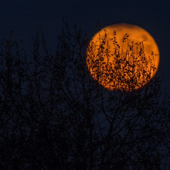 Vollmond am 21.03.2019, Beziehungs-Vollmond am 21.3.2019