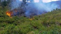 Terduga Pelaku Pembakaran Hutan di Sekitar Danau Toba Ditangkap Polisi
