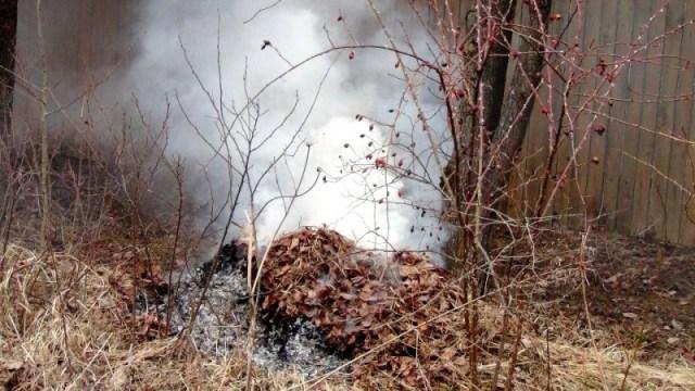 Власти ДНР запретили сжигать листву в черте населенных пунктов