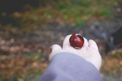 """Fake"" chestnuts"