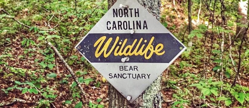 Panthertown Bear Sanctuary