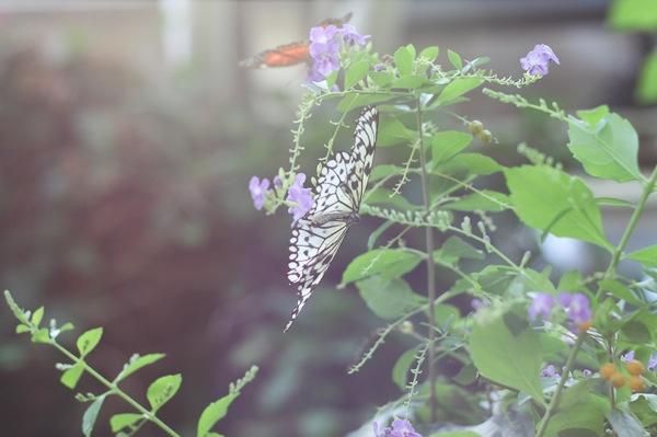 20110817 Butterfly Pavilion 13