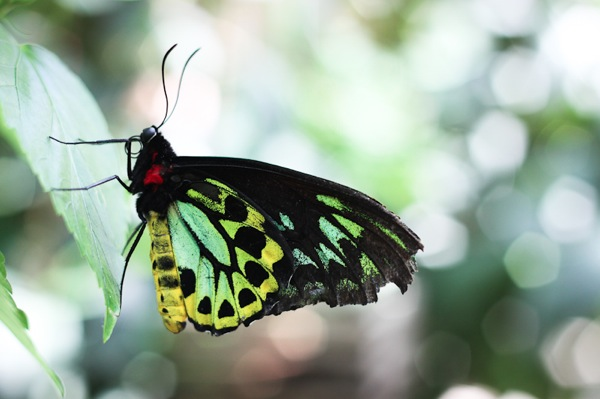 20110817 Butterfly Pavilion 15
