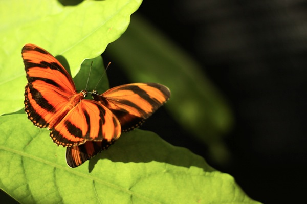 20110817 Butterfly Pavilion 20