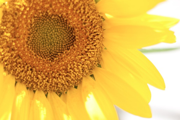 20110904 0903 new lens 4