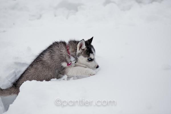 20120203 0203 Snowday 72
