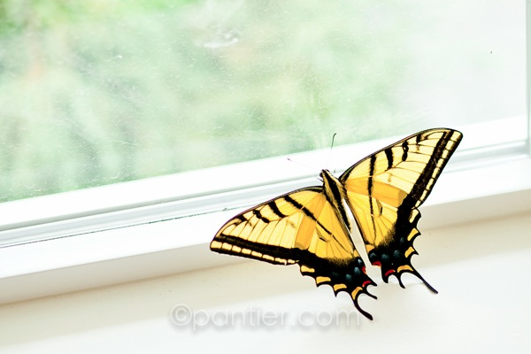 20120708 0707 Boys and Butterfly 59