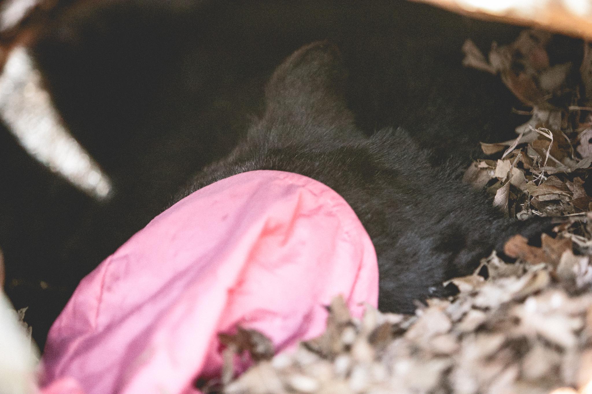0306-1 bears-240