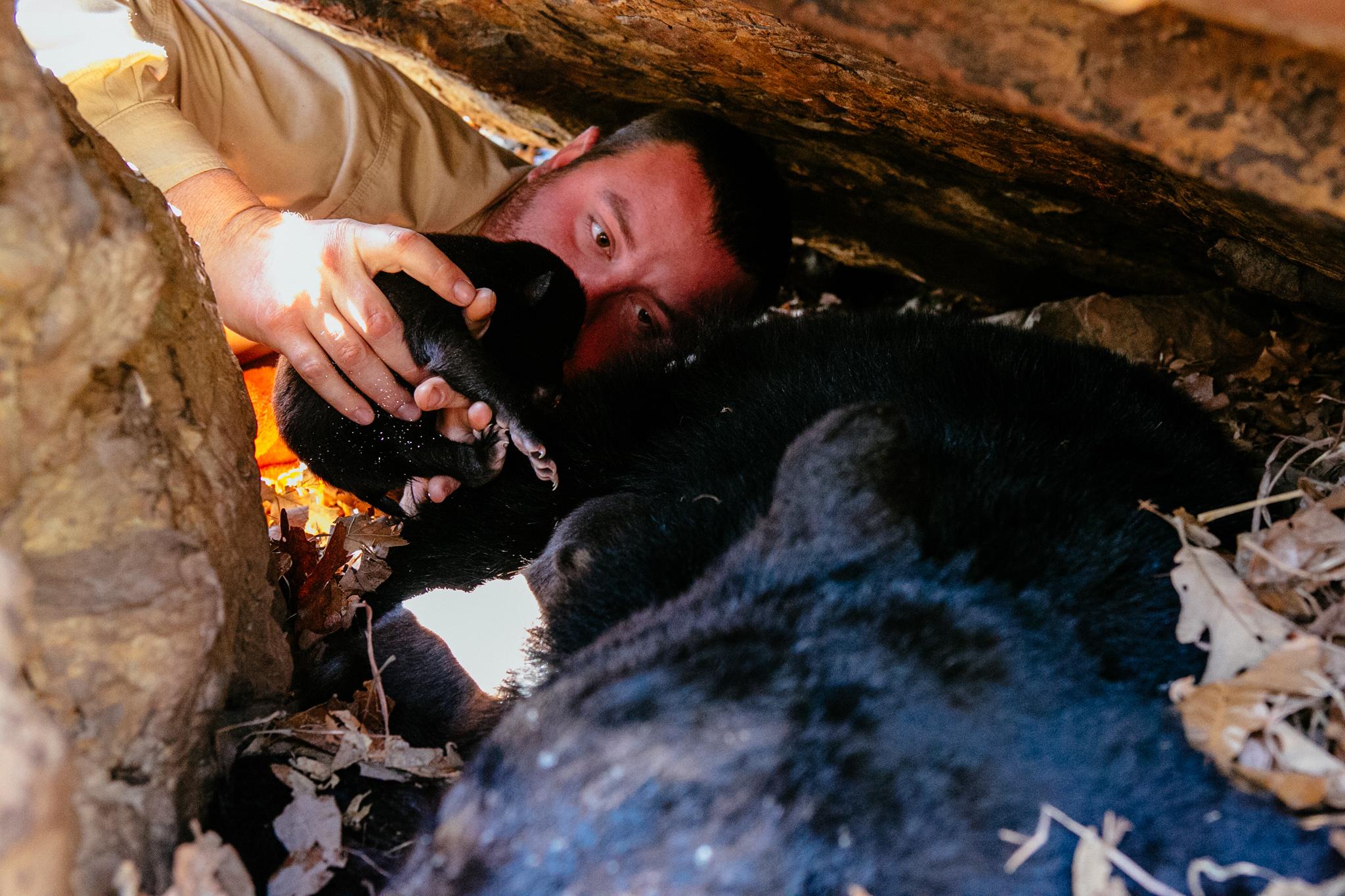 0306-2 bears-176