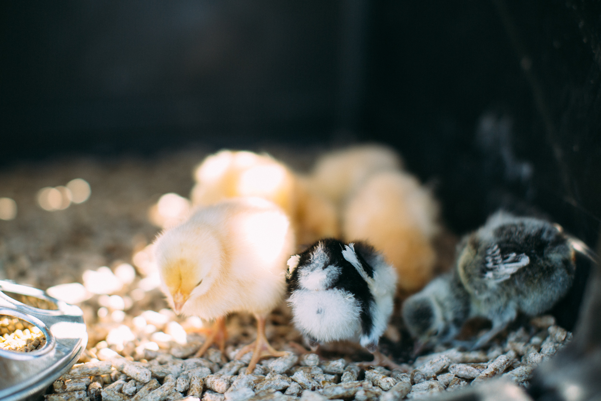 0328 chicks-017