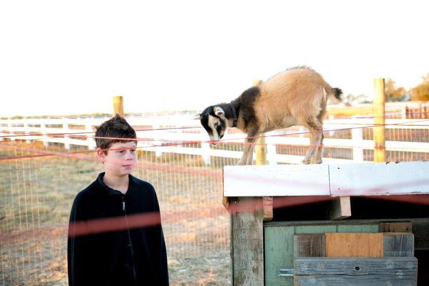 0926 goats-027