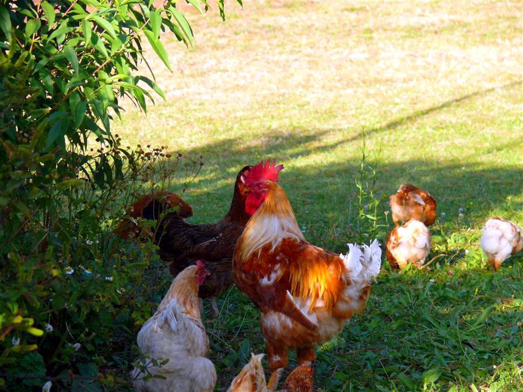 o-galo-pantin-f-goiriz-22-09-07-001-9.jpg