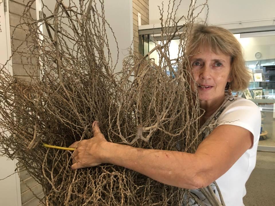 date palm stems