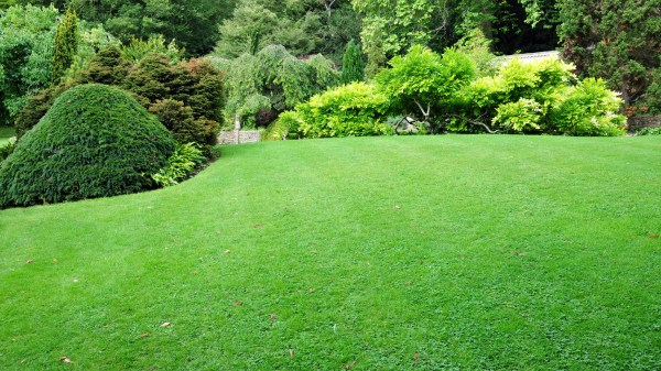 lawn care advice and small