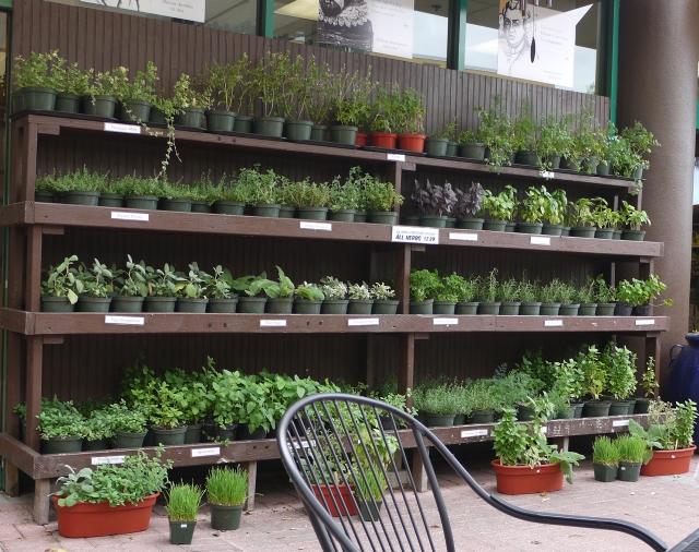 Organic Nursery in Florida