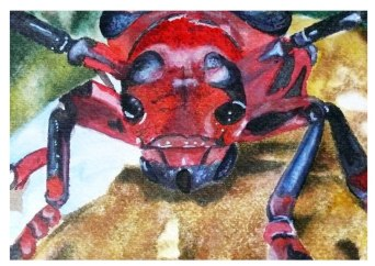 Escarabajo.2010