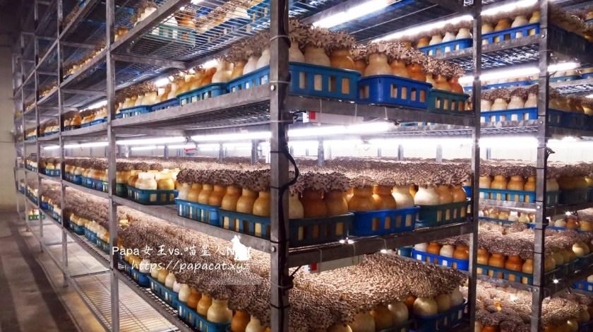 隆谷菇菇園