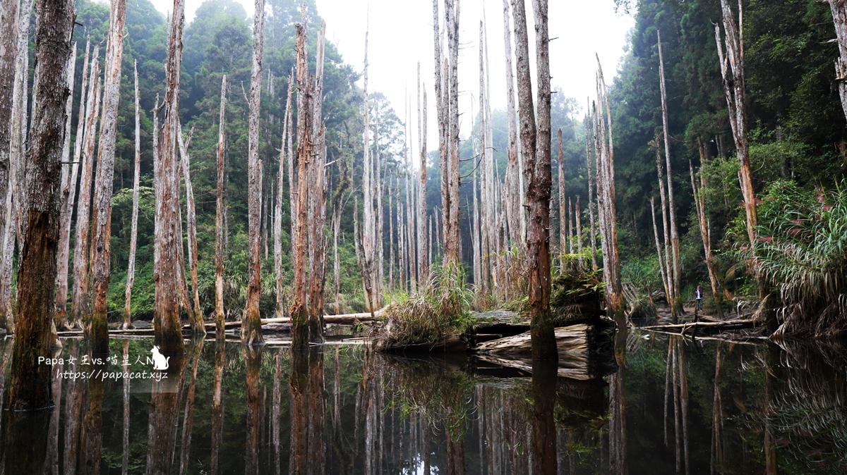 景點 |南投 忘憂森林-不秘境的秘境,隨著四季變化,忘憂說枯水期比較美