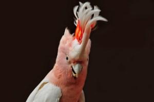 Papageienkäfig kaufen für Kakadus