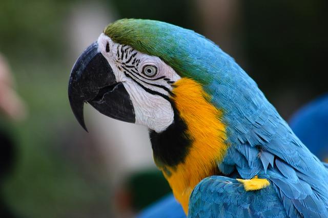 Papageienkäfig kaufen Blauer Ara