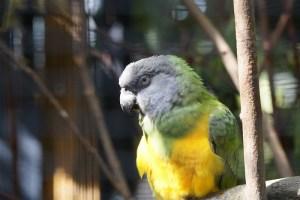 Voliere kaufen Papageienvoliere kaufen