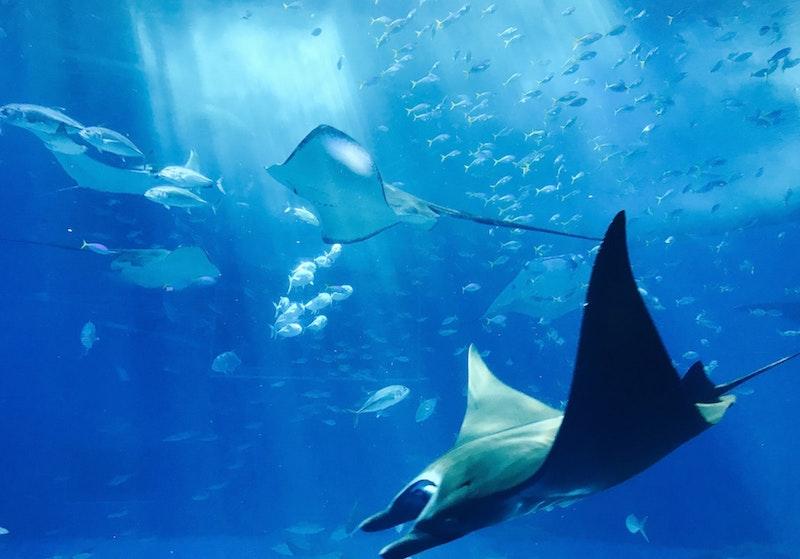 シーライフ水族館シドニー
