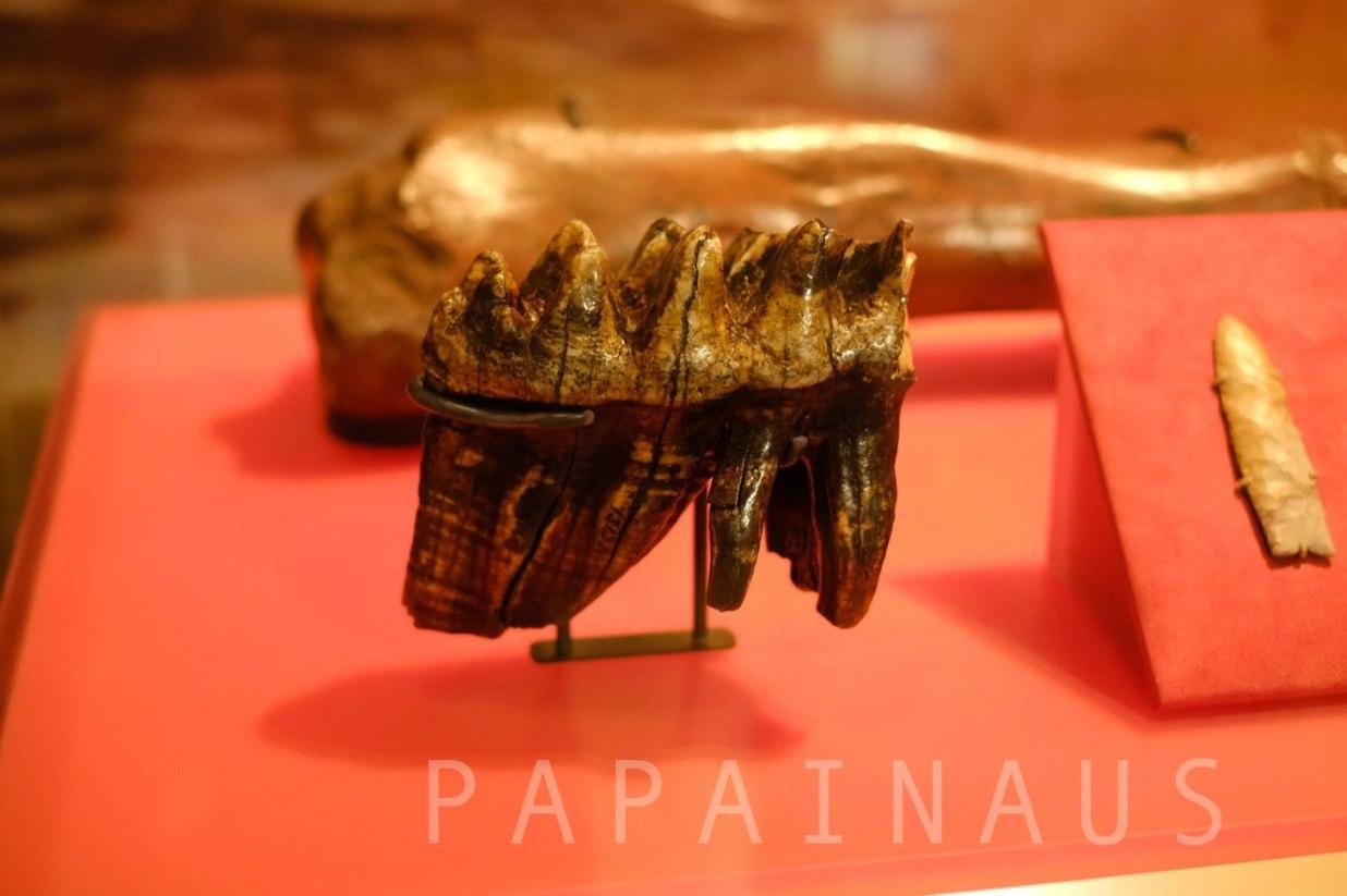 マンモス歯型