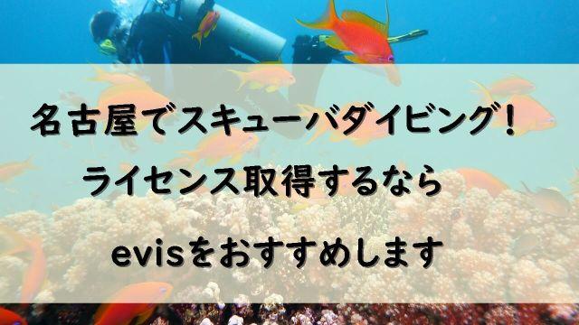 名古屋でダイビングショップをお探しならevisがおすすめです