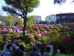 2010_05_01 根津神社2.JPG