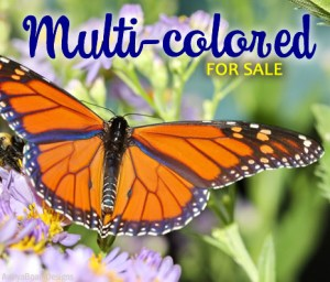 Multi Color Paparazzi Jewelry items for sale Album cover photo