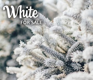 White Paparazzi Jewelry items for sale Album cover photo