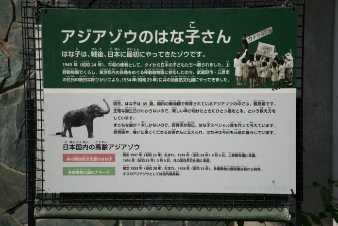 アジアゾウのはな子さんプロフィール(井の頭公園の動物園 / 東京・吉祥寺)