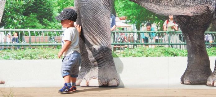 東京の動物園、どっちへ行く? 上野公園は有名な動物がたくさん、井の頭公園はミニ遊園地も!