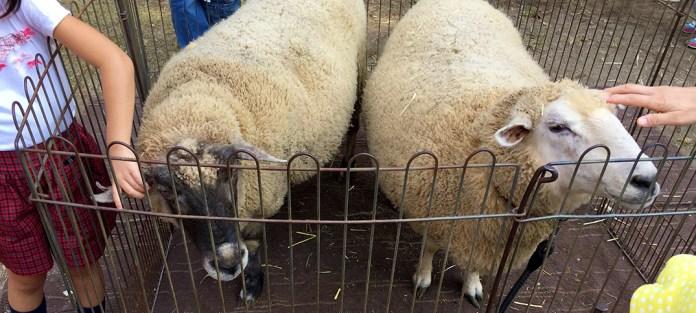 羊の頭をなでる子供たち