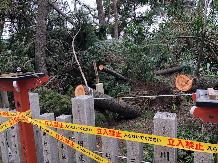 弥栄神社(岸和田市)台風で倒れた木々