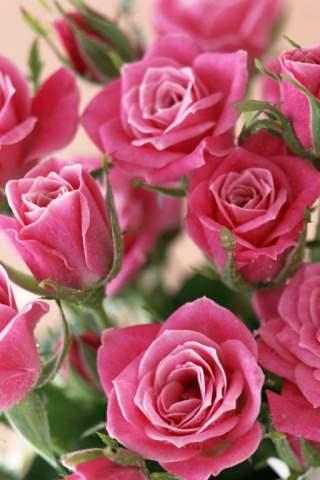 Cute Wallpapers Of Roses Papel De Parede Para Celular Flores Rosas 320x480 2