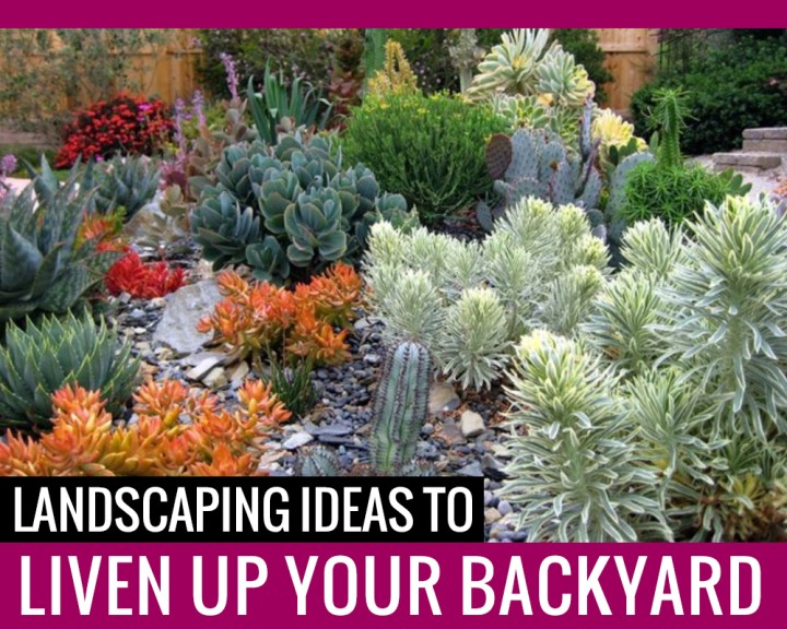 Landscaping Ideas to Liven Up your Backyard