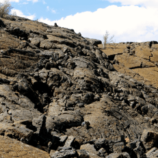 This is a more recent bed of lava, not so many plants have gotton a hold here.